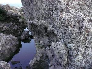 Yakko_4